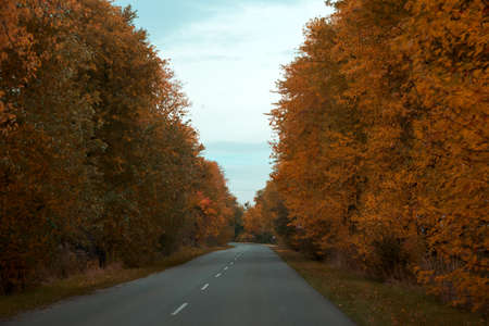 Empty asphalt road through autumn forest. Nature autumn background