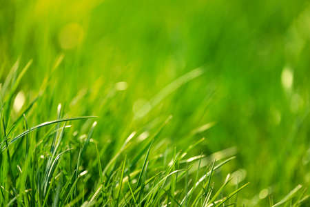 Fresh green grass. Abstract spring background. Stock fotó