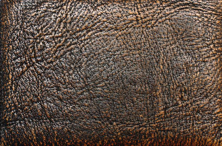 old leather: Old leather
