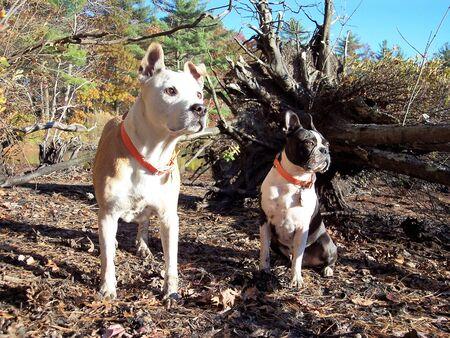 Dogs Portrait in Burrillville RI Hike