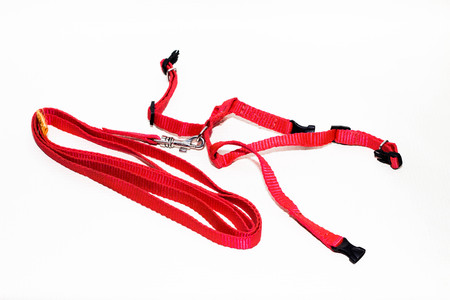 Leather cat harness on white background red Stock Photo