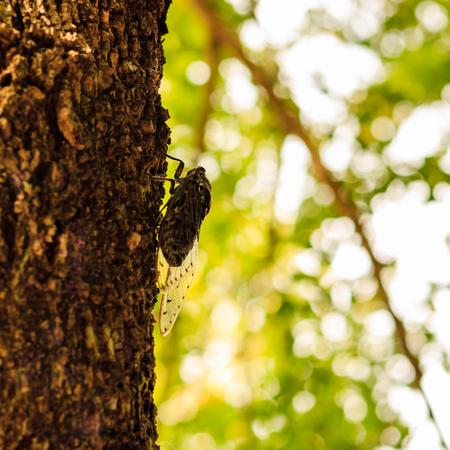 Close up of cicada bug on the tree. Imagens