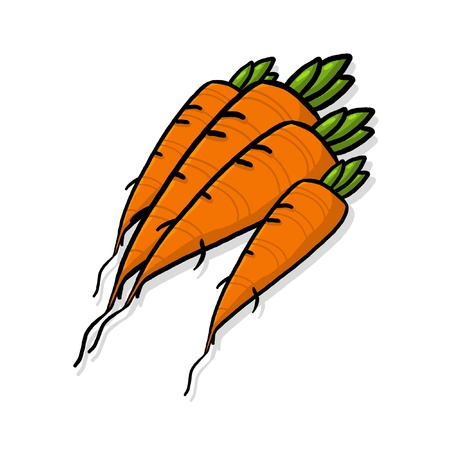 Bunch of carrots; bundle of carrots drawing; fresh carrots root illustration Stock Photo