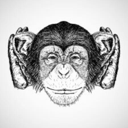 monkey hear
