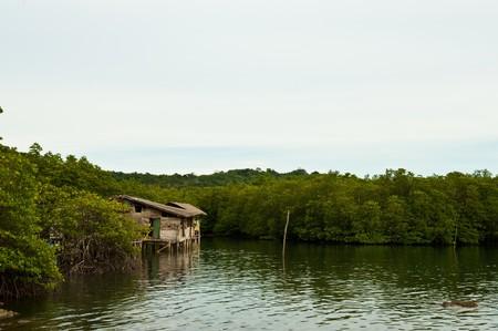 Mangrove Kohkood Thailand photo