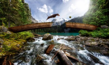 wiener dog: Wiener dog jumping over broken bridge above a stream
