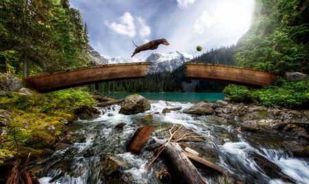 Wiener hond springen over een gebroken brug boven een stroom