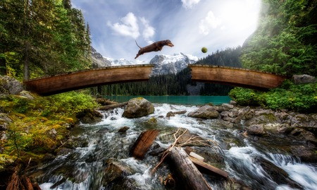 Sausage dog leaps over broken bridge chasing ball