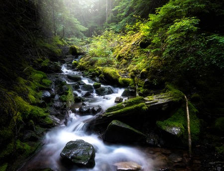 Flowing stream through green mossy forest valley Stock Photo