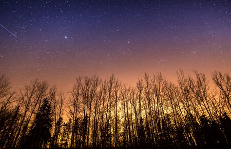 Stars and light pollution above silhouetted tree in alberta