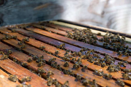 Honey bees on top of a hive Stock Photo