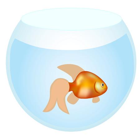 gold fish bowl: gold fish vector image Illustration