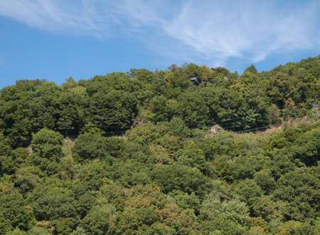 west virginia trees: On the mountain Stock Photo