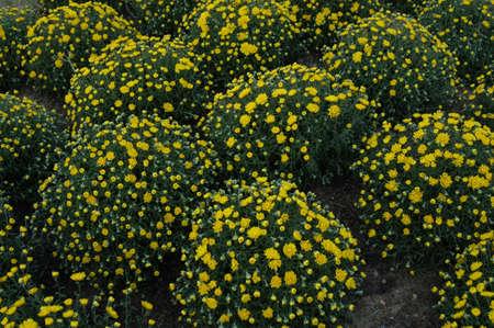 Plant goed in flull bloom in het voorjaar van het jaar