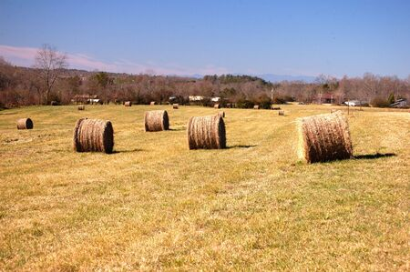 Hay bales in the field ready for pickup