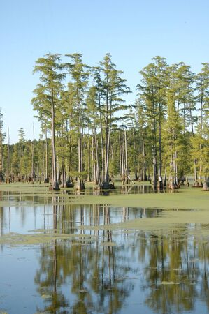 ble:  A large swamp in the southern united states Stock Photo