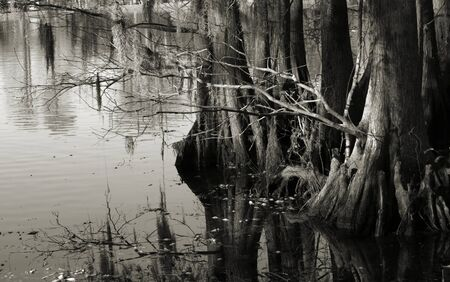 swampy: Trees along the shore of a swampy lake shown in black and white Stock Photo