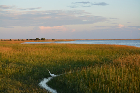 View along the coast o North Carolina. A white crane in the grass