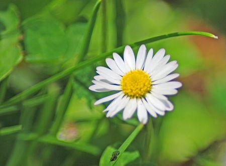 curative: daisy Stock Photo