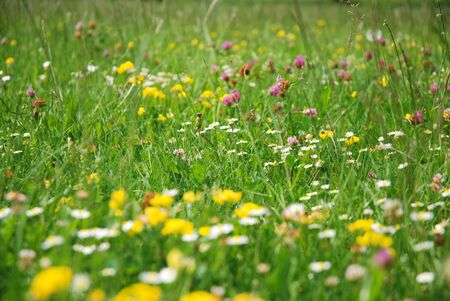 curative: meadow