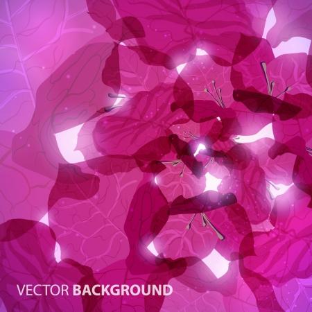 bougainvillea flowers: Bougainvillea  background Illustration