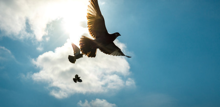 Pigeons fly across the sky in the background of a bright sun Stock Photo