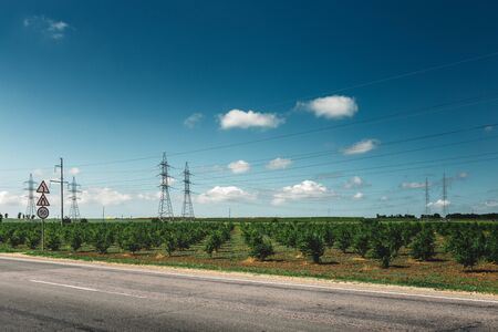 kuban: Asphalt road, passing by the green vineyards, picturesque industrial agricultural landscape