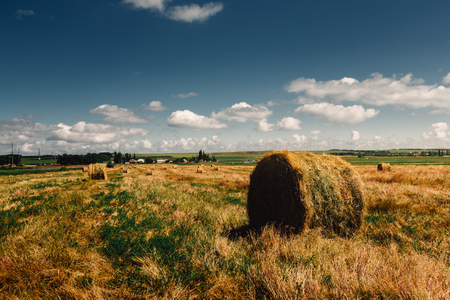 kuban: Hay bale. Agriculture field with sky. Rural nature in the farm land. Straw on the