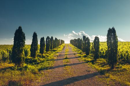 Direkte Straße mit Pappelreihen links und rechts, Perspektive Horizont, ländliche Landschaft Standard-Bild - 80990811