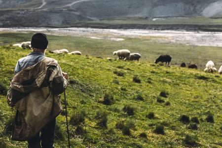 山のフィールドに羊飼いと羊、背面図。農業の概念