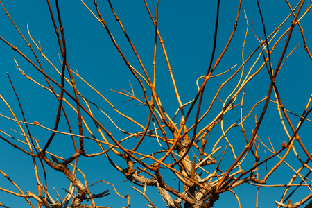 Branches Of A Tree Against A Blue Sky Stock Photo