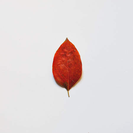 Red autumn leaf on a white background. The view from the top. Creative concept of minimalism in design. Natural design 写真素材