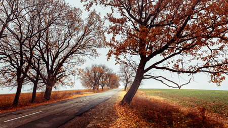 Portrait of autumn. Lonely road on the background of fallen leaves and green fields. Concept of road trip. Autumn landscape without people 写真素材 - 117181321