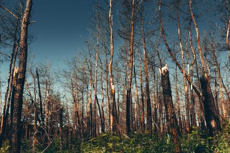 Problèmes environnementaux nationaux, pollution de l'environnement, forêt morte, production nocive, déforestation barbare, menace pour l'existence du concept de vie