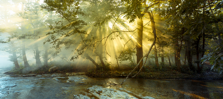 Sun rays pass through the morning mist in the forest against background of the river