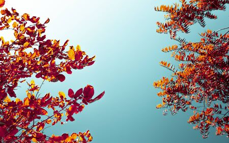 Creative colorful layout of plant leaves on a blue sky background. Concept of natural design and style.