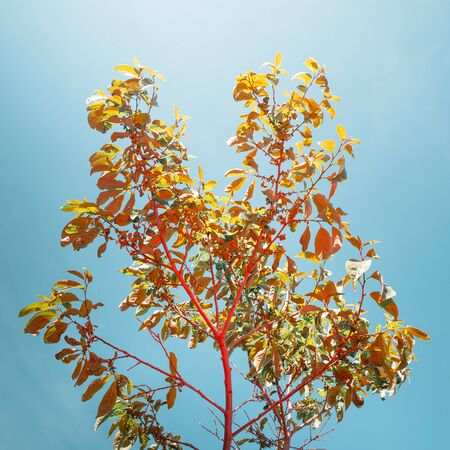 Creative Image Of Young Tree On Background Of Blue Sky As Symbol Of New Life. Colorful Natural Pattern