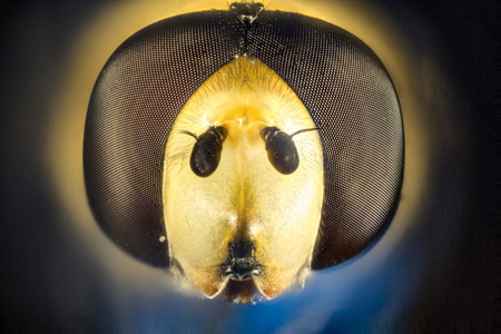 hover: this is a hover fly head