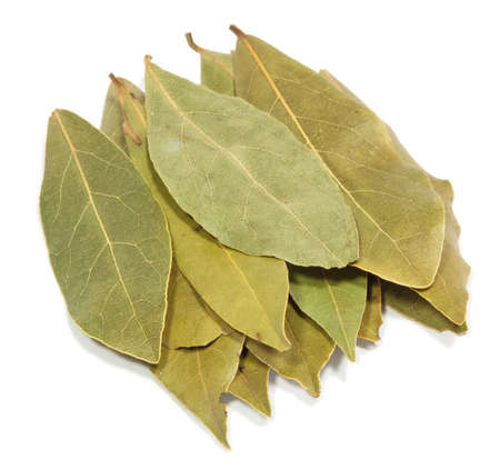 Bay leaves isolated on a white background  photo