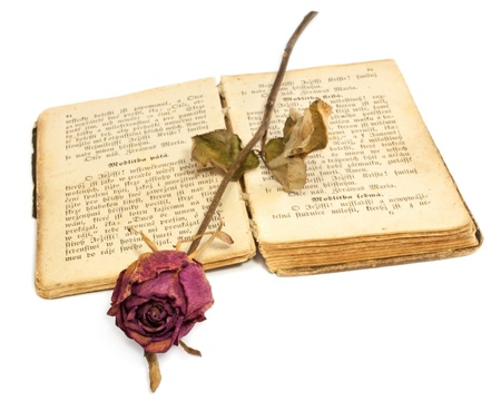 Dried rose on an old book  photo