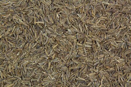caraway: Caraway seeds usable as background
