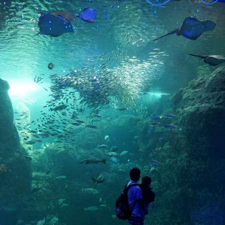 Dad and child watch sea fish in large aquarium Foto de archivo