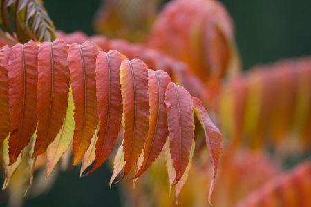 leaf Stock Photo - 3864061
