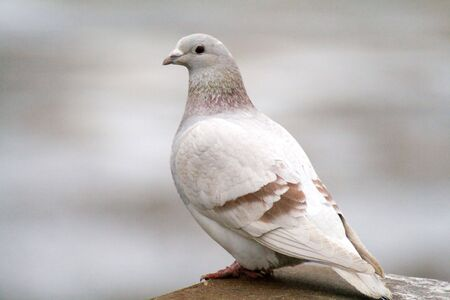 beautiful wild dove concerned when taking photos photo