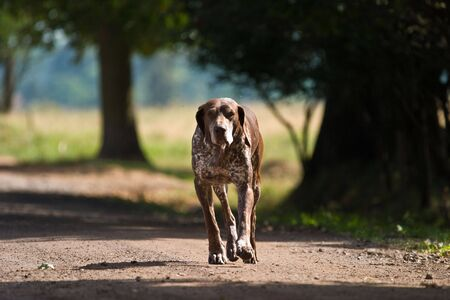 dog without name walking in beautifull sunny day photo