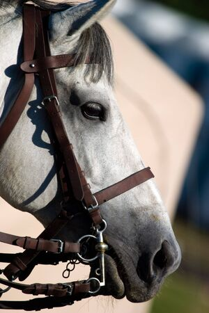 beautiful horse jumping the barrier at the equestrian events photo