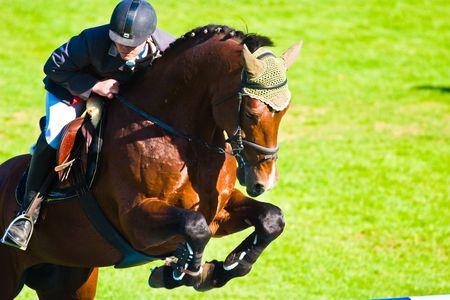 Hermoso caballo en un prado verde en día soleado  Foto de archivo