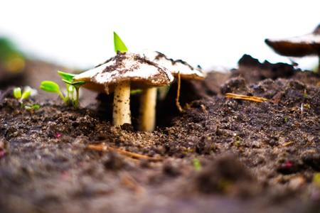 forest mushroom in moss after bir longtime rain Stock Photo - 7030509