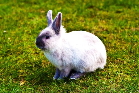 Very Cute Easter Bunny Peeking Through the Grass,  cute standing white rabbit on the grass  photo