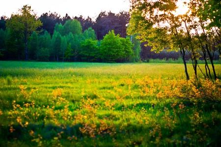Anlagen zur natürlichen Hintergrund,  Fluffy Wildpflanze gruppiert in sonnigen Tag